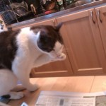 Katten Mysen slickar sin tass