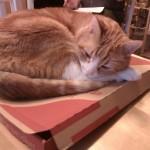 Katten Pysen på kartong