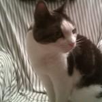Katten Mysen spanar.