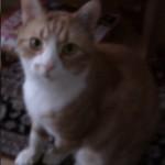 Pysen är en förskräckt katt.