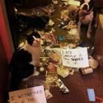 Oskyldiga. Katt plus hund.