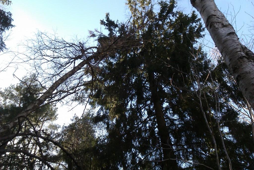 träd-vält