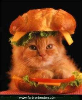 Katt och bröd.