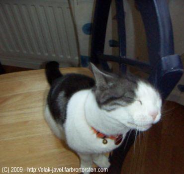 Åååhhhh, så skönt. När husse inte är hemma får stolen han brukar sitta på rycka in istället.