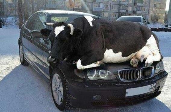 djur-ko-bil